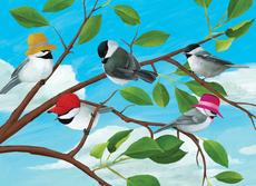 Birds Mini