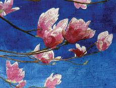 Tulip Tree (Valentine's)