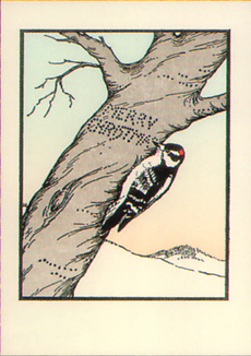 Woodpecker Boxed Holiday Cards