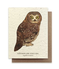 Saw-Whet Owl Plantable Seed Card