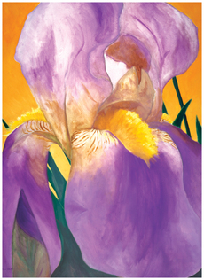 Dawn Iris