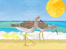 Sandpipers Beach