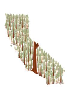 California in Redwood (Blank)