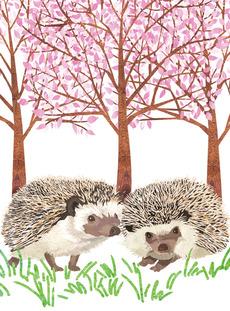 Cherry Blossom Hedgehogs