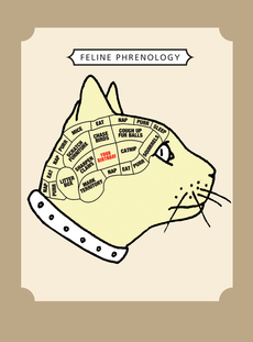 Cat Phrenology