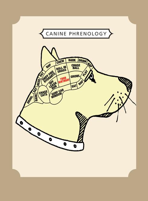 Canine phrenology