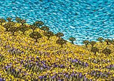 Golden Meadow Mini
