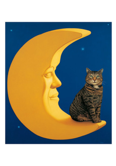 Cat and Moon Boxed Notecards