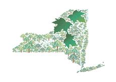 New York in Sugar Maple