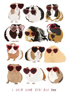 Guinea Pigs Valentine's Day Card