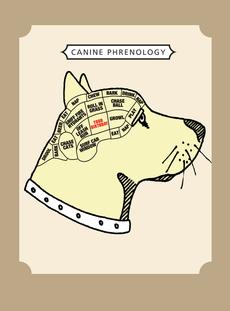 Dog Phrenology