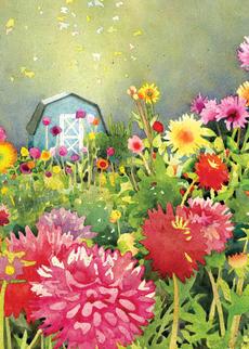 Dahlia Garden (Mother's Day)