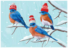 Three Bluebirds