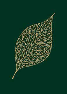 Shine: Leaf