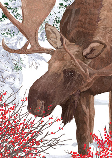 Moose with Berries