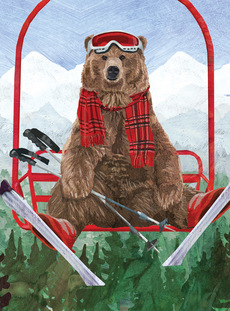 Ski Grizzly Bear